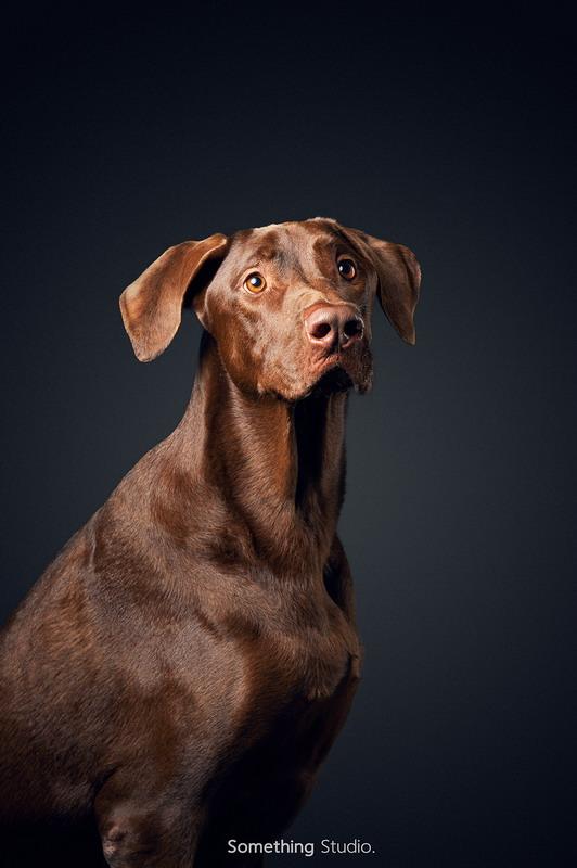 寵物攝影-台灣犬TAIWAN DOG