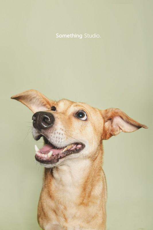 收容所攝影專案-巴克動物懷善救援協會