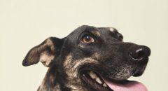 寵物攝影,寵物肖像,毛孩,米克斯,領養代替購買