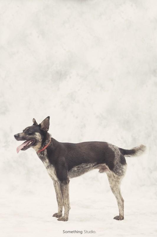 收容所攝影專案-巴克動物懷善救援協會-補獸夾