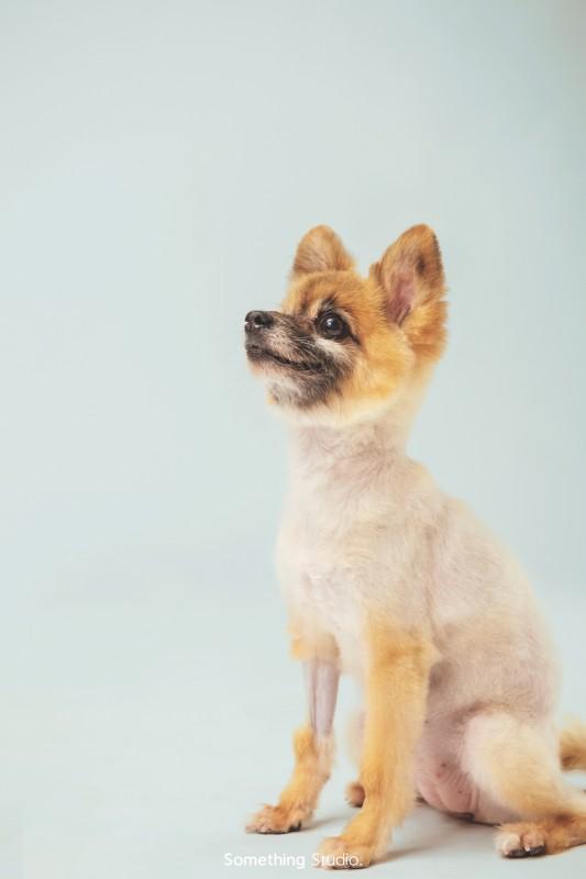 寵物攝影-米克斯Mix