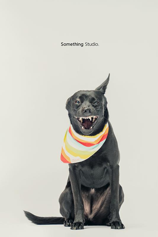 SOMETHINGSTUDIO,三牲工作室,中途攝影,寵物寫真,寵物攝影,寵物肖像,毛孩,毛孩寫真,汪星人,領養不棄養,領養代替購買