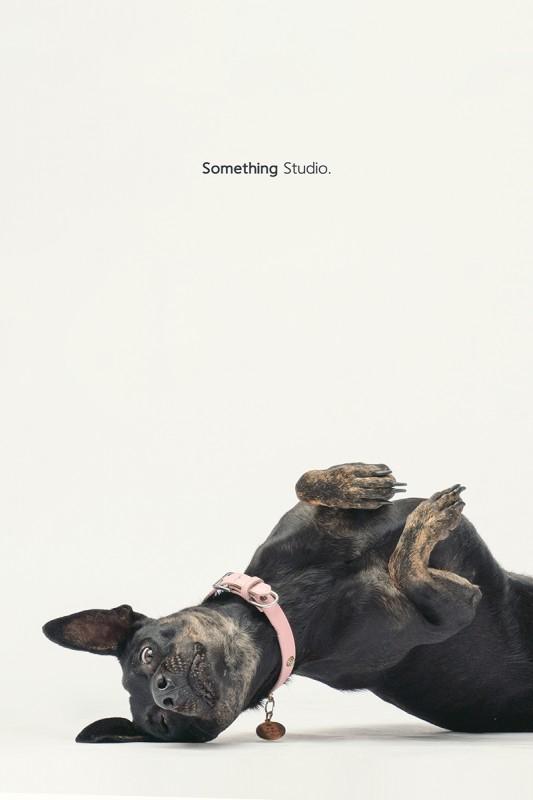 SOMETHINGSTUDIO,三牲工作室,中途攝影,寵物寫真,寵物攝影,寵物肖像,毛孩,毛孩寫真,汪星人,領養不棄養,領養代替購買,SOMETHIN,三牲