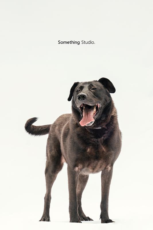 SOMETHINGSTUDIO,三牲工作室,中途攝影,寵物寫真,寵物攝影,寵物肖像,毛孩,毛孩寫真,汪星人,領養不棄養,領養代替購買,SOMETHING,三牲