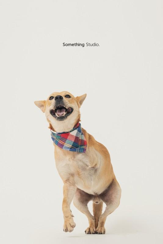 SOMETHINGSTUDIO,三牲工作室,三牲,中途攝影,寵物寫真,寵物攝影,寵物肖像,毛孩,毛孩寫真,汪星人,領養不棄養,領養代替購買
