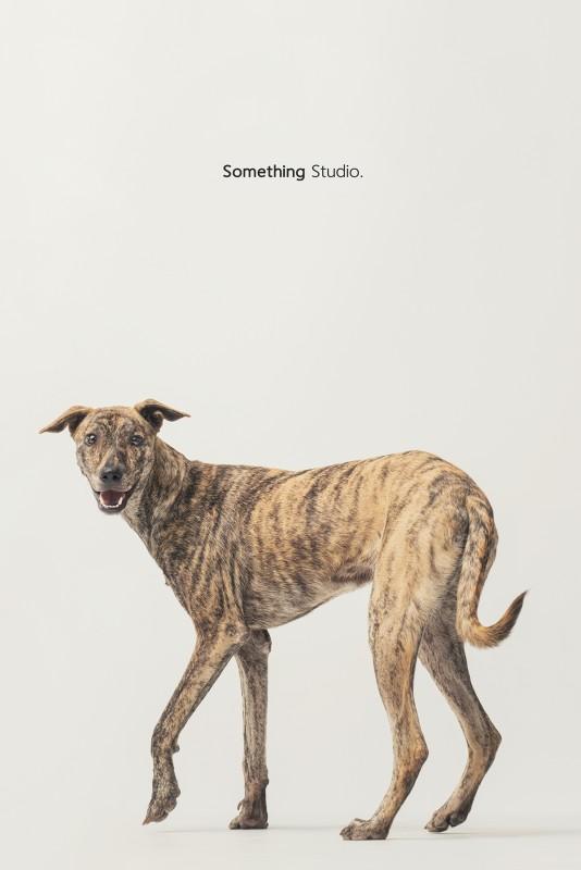 SOMETHINGSTUDIO,三牲工作室,三牲,中途攝影,寵物寫真,寵物攝影,寵物肖像,毛孩,毛孩寫真,汪星人,領養不棄養,領養代替購
