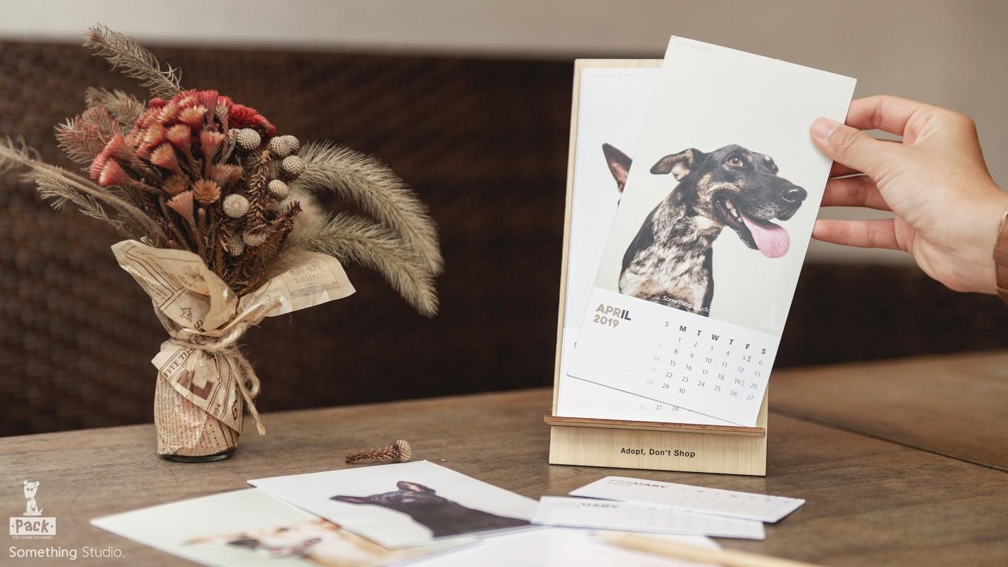 SOMETHINGSTUDIO,三牲工作室,三牲,中途攝影,寵物寫真,寵物攝影,寵物肖像,寵物商業攝影,寵物用品毛孩,毛孩寫真,汪星人,領養不棄養,領養代替購買