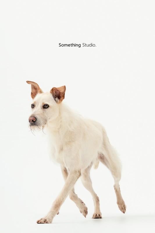 SOMETHINGSTUDIO,三牲工作室,三牲,中途攝影,寵物寫真,寵物攝影,寵物肖像,毛孩,毛孩寫真,汪星人,領養不棄養,領養代替購買,tamedfox,台灣巴克