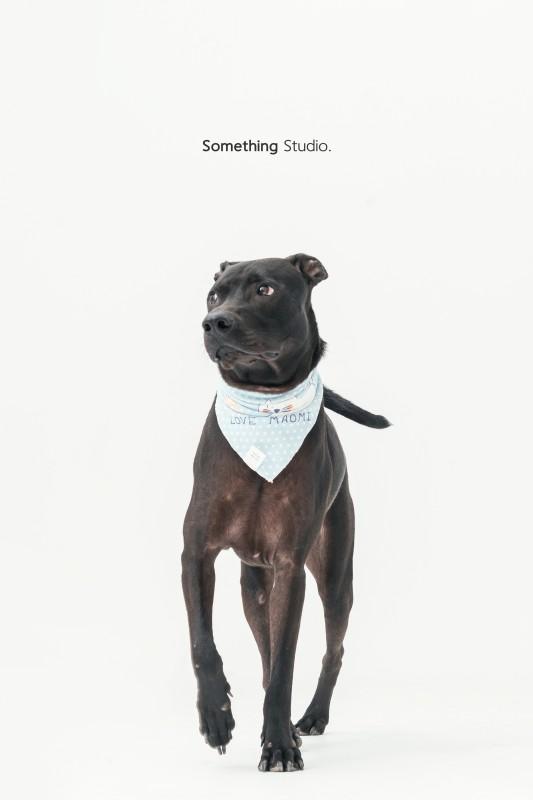 SOMETHINGSTUDIO,三牲工作室,三牲,中途攝影,寵物寫真,寵物攝影,寵物肖像,毛孩,毛孩寫真,汪星人,狗,米克斯,領養不棄養,領養代替購買