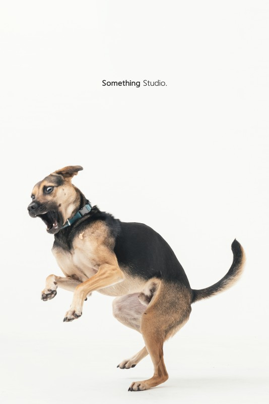SOMETHINGSTUDIO,三牲工作室,三牲,中途攝影,寵物寫真,寵物攝影,寵物肖像,毛孩,毛孩寫真,汪星人,領養不棄養,領養代替購買,