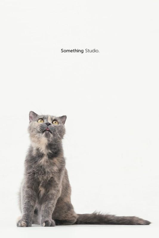 SOMETHINGSTUDIO,三牲工作室,三牲,中途攝影,寵物寫真,寵物攝影,寵物肖像,毛孩,毛孩寫真,喵星人,貓奴,貓,領養不棄養,領養代替購買